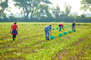 Das Arbeiten auf dem Feld kann als Nebentätigkeit im Urlaub erlaubt sein.